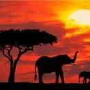 Екскурзия в ЮАР - 1 ден