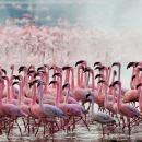 Екскурзия в Танзания - 7 ден