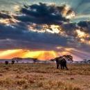 Екскурзия в Танзания - 5 ден